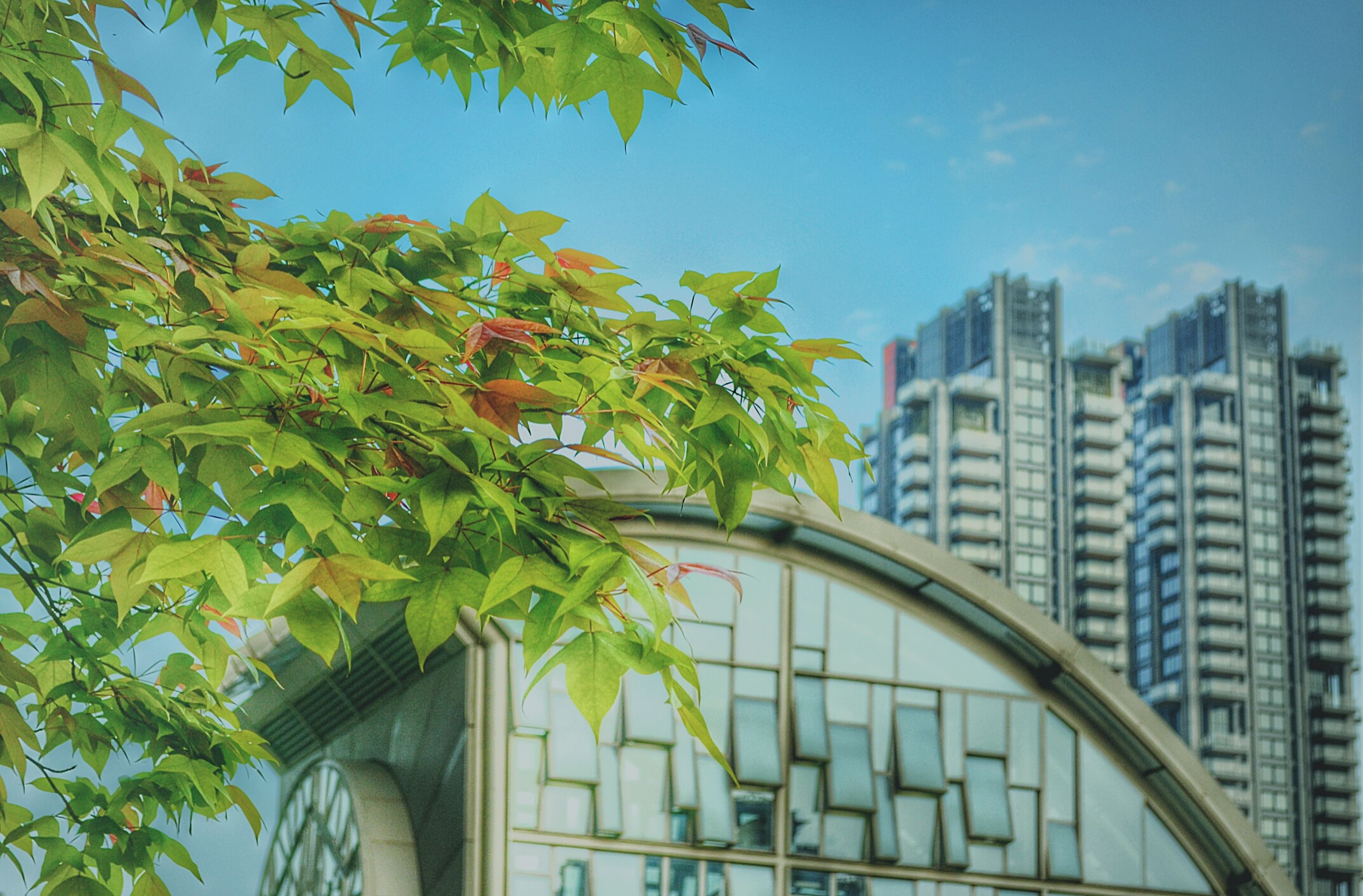 architecture, building exterior, built structure, city, skyscraper, low angle view, modern, outdoors, tower, growth, tree, no people, residential building, cityscape, day, urban skyline, sky, downtown district