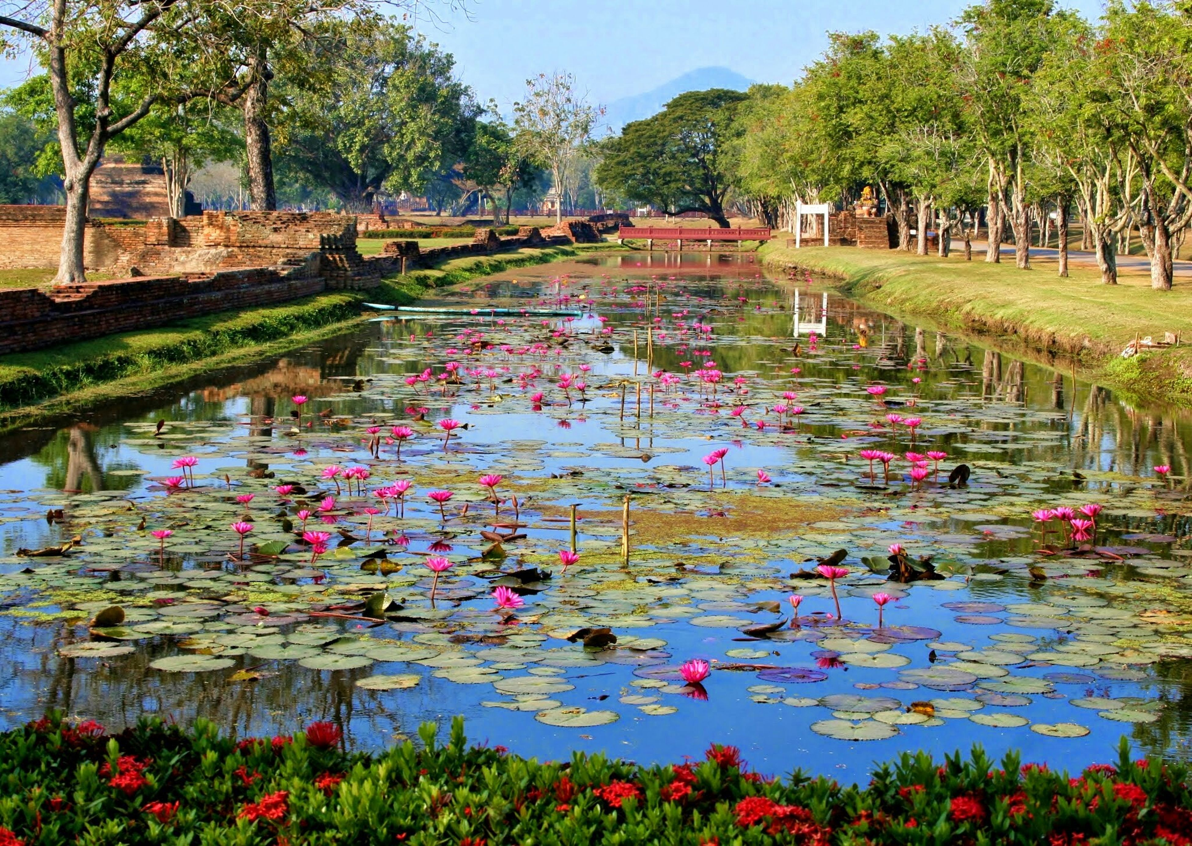 water, tree, growth, reflection, flower, beauty in nature, lake, pond, nature, tranquility, multi colored, plant, park - man made space, green color, tranquil scene, scenics, day, water lily, waterfront, outdoors