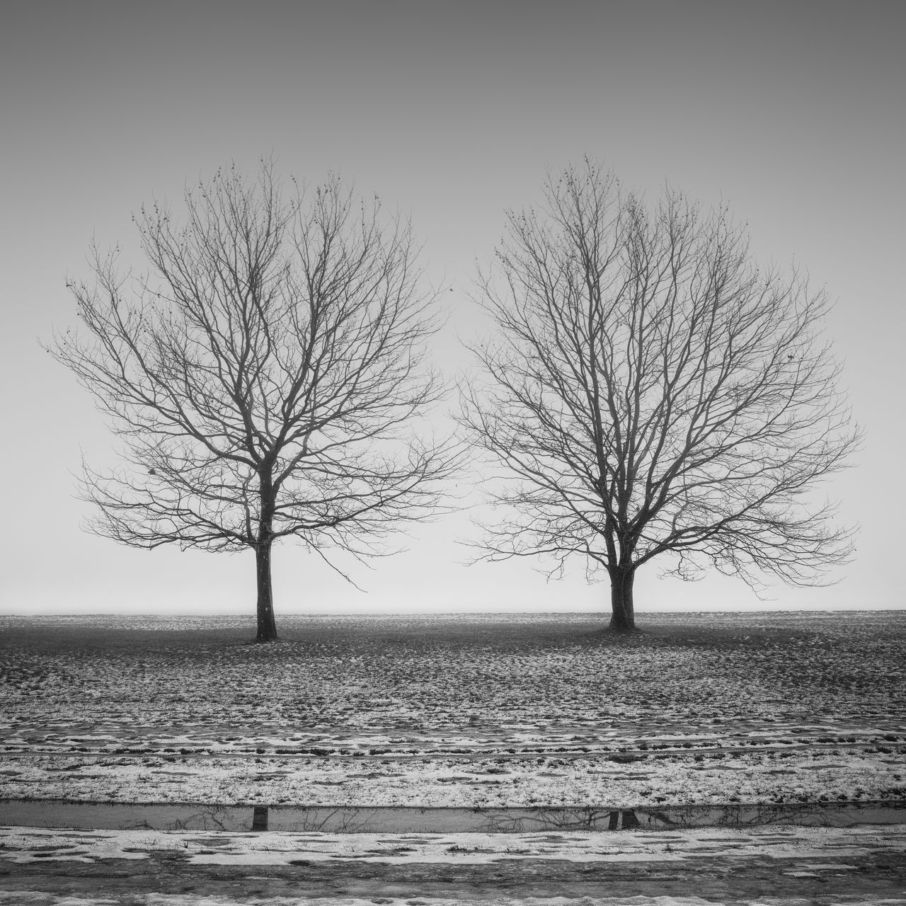 two barren trees on a frozen field Bare Tree Beach Beauty In Nature Berlin Black And White Branch Day Fineart Frozen Field Horizon Over Water Isolated Landscape Lone Nature No People Outdoors Philipp Dase Scenics Sea Sky Tempelhofer Feld Tranquil Scene Tranquility Tree Water