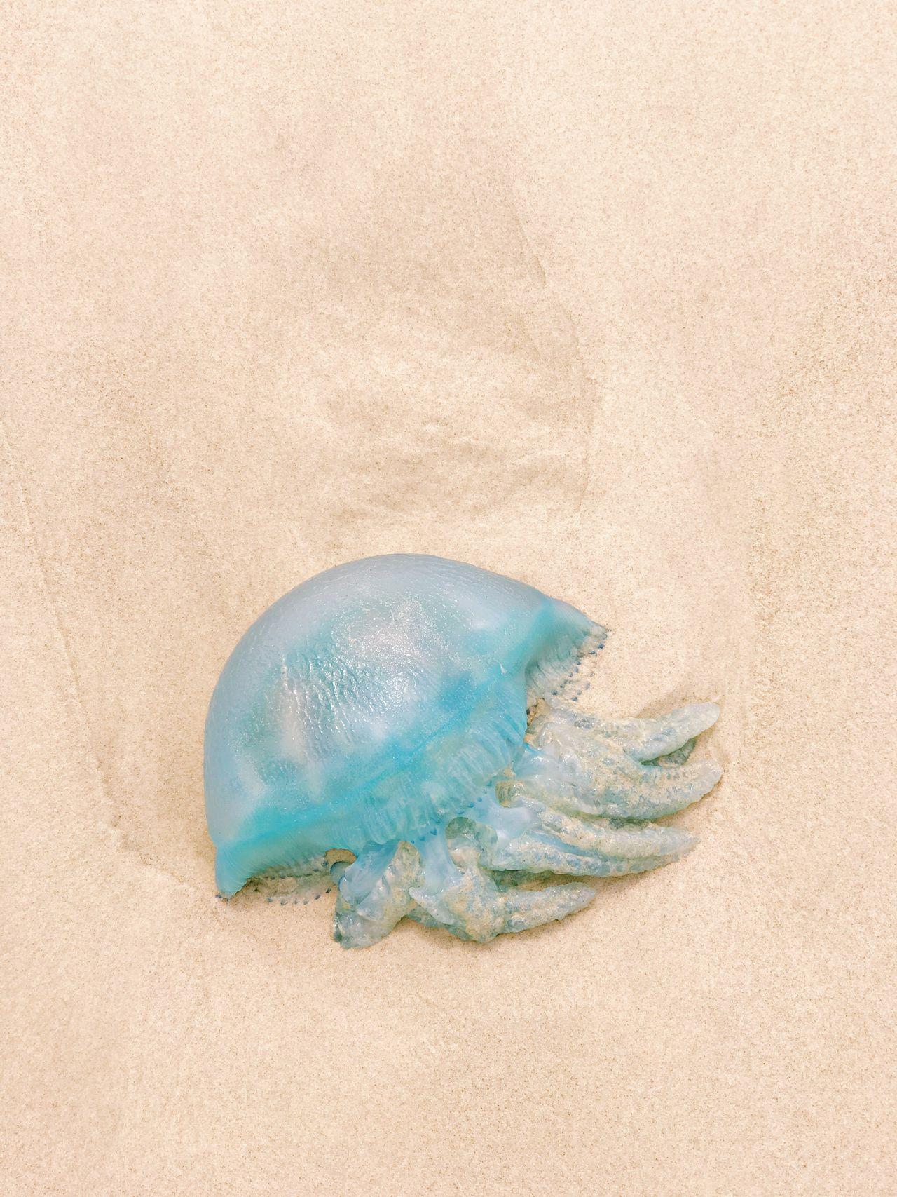 No People Sea Life Beach EyeEmNewHere Day Nature Jellyfish