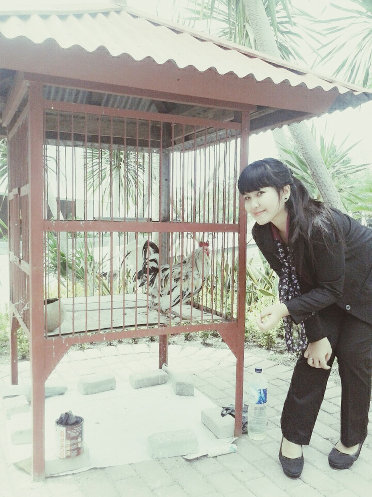Chiken Handsome Goodday