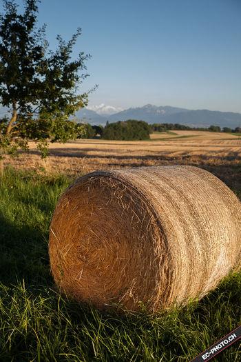Agriculture Bussigny Haystack Rural Scene Summer Sunset Switzerland Tranquility
