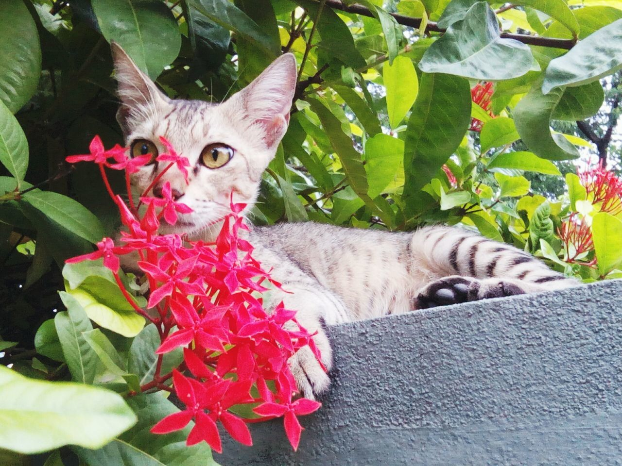 domestic cat, animal themes, pets, feline, mammal, domestic animals, one animal, cat, leaf, looking at camera, flower, plant, portrait, sitting, day, no people, outdoors, growth, nature, close-up