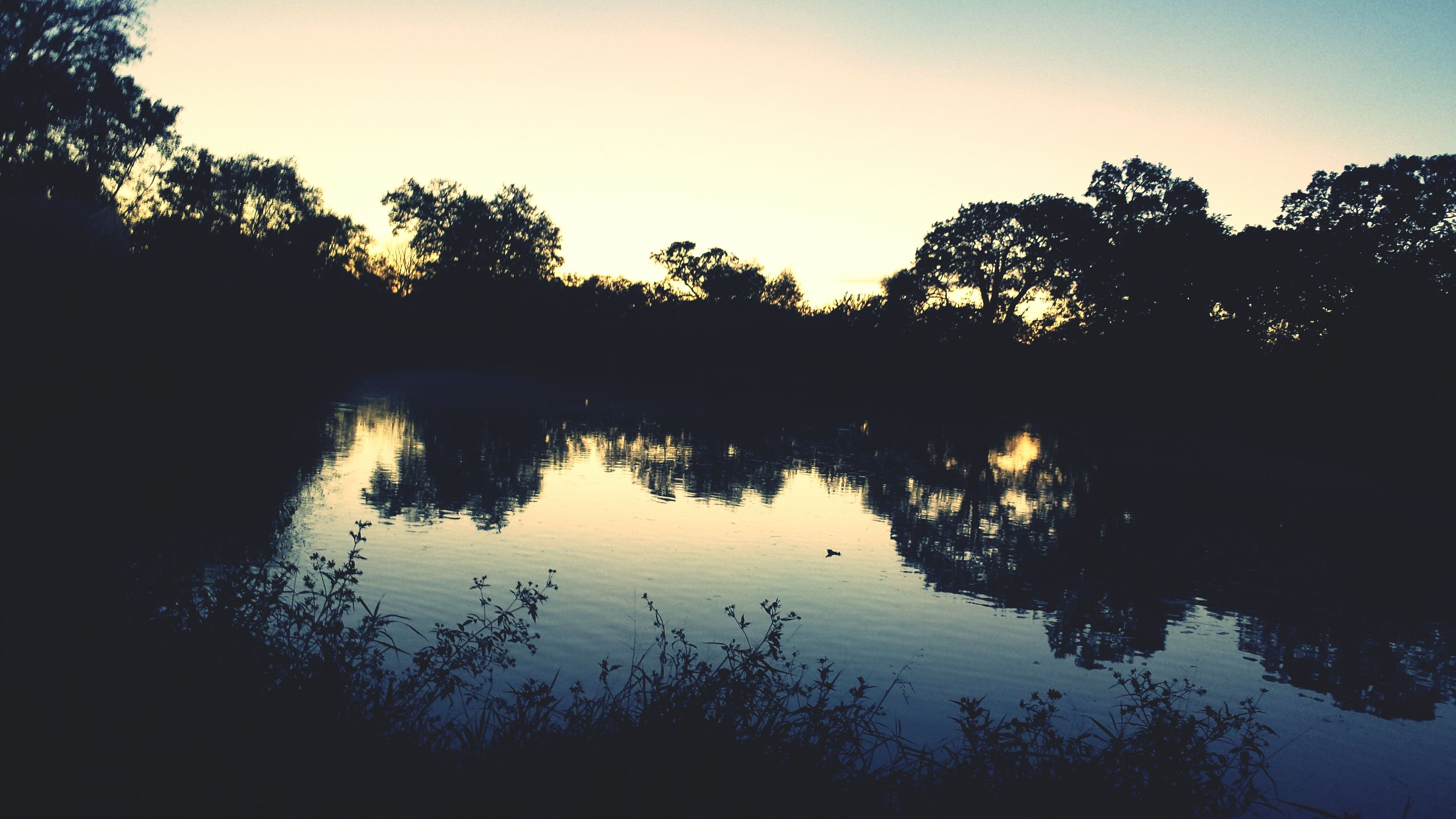 silhouette, tree, water, sunset, reflection, tranquil scene, tranquility, lake, scenics, beauty in nature, nature, sky, clear sky, idyllic, calm, growth, dusk, standing water, river, outdoors