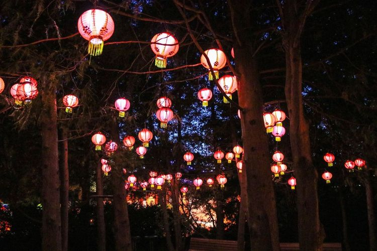 Jardin Botanique Botanical Gardens Canada Canada 150 Low Angle View Gardens Of Light Chinese Lantern Illuminated Tradition Chinese Lantern Festival Decoration Chinese Lantern Traditional Festival Low Angle View Lantern Cultures Hanging Been There.