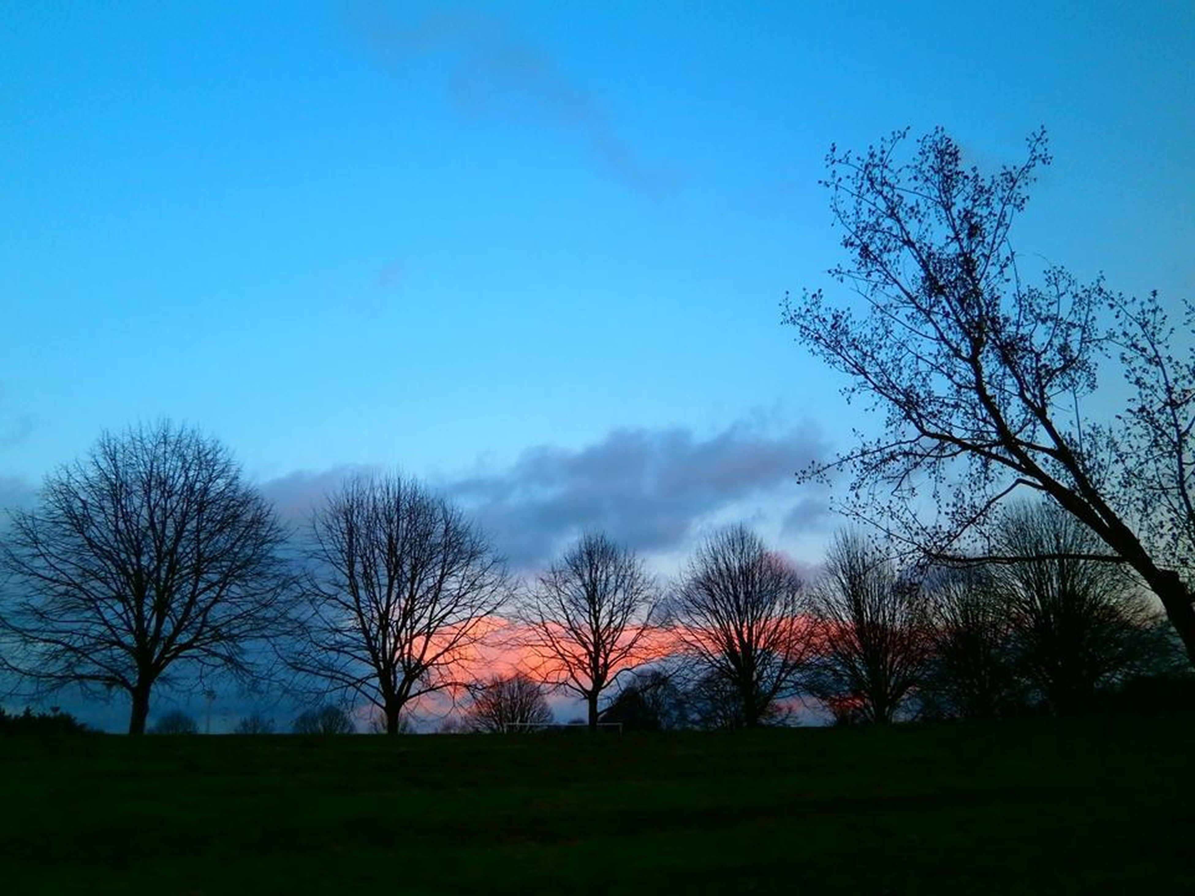 bare tree, tree, silhouette, tranquility, tranquil scene, scenics, sky, landscape, beauty in nature, branch, blue, field, nature, copy space, clear sky, dusk, sunset, non-urban scene, outdoors, no people
