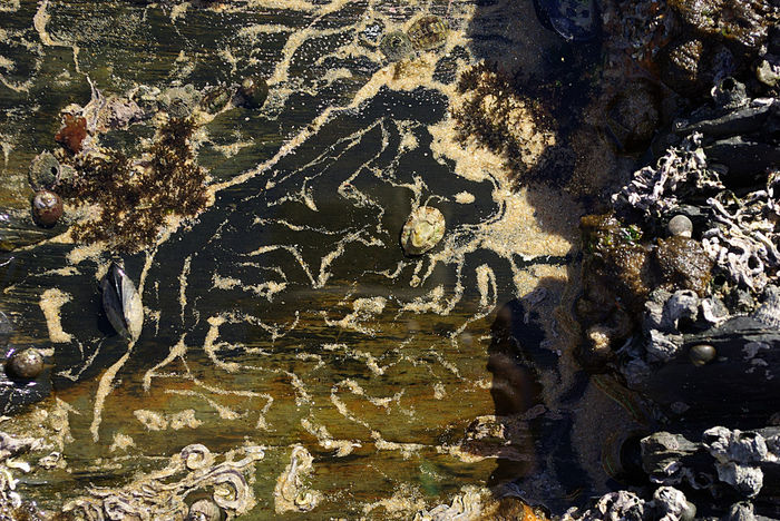 Art Patterns In Nature Random Art Sea Art Sea Life Tranquility Water And Sand Water Reflections