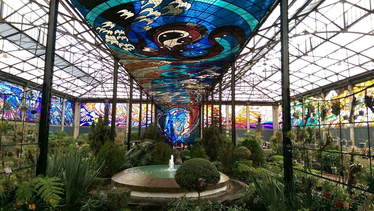 Botanical Gardens Garden Stainedglass México