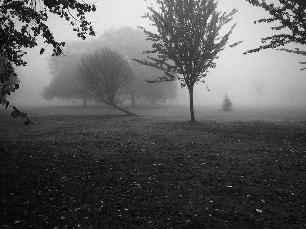 Blackandwhite Calm Ealing Fog Food Lammas Lammaspark Light London London Parks Non-urban Scene Outdoors Remote Sand Scenics Tranquility Water Witchy