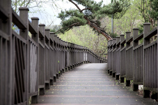 Beauty In Nature Day Diminishing Perspective Empty Fence Green Color Growth In A Row Long Narrow Nature No People Outdoors Plant Repetition Sky The Way Forward Tranquil Scene Tranquility Tree Vanishing Point Walkway Walkwaywhy Wooden