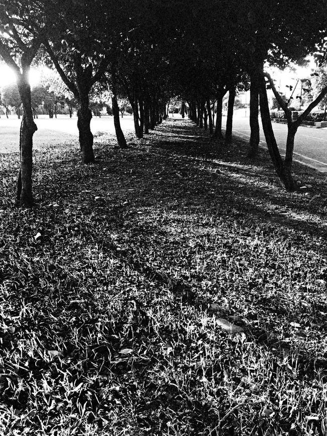 Sunshine。 EyeEm Gallery EyeEm Best Shots - Black + White 2016 EyeEm Awards Everything In Its Place How Do We Build The World? TOWNSCAPE EyeEmBestPics The Tourist Tree Shadow Sunshine Path Sanxia
