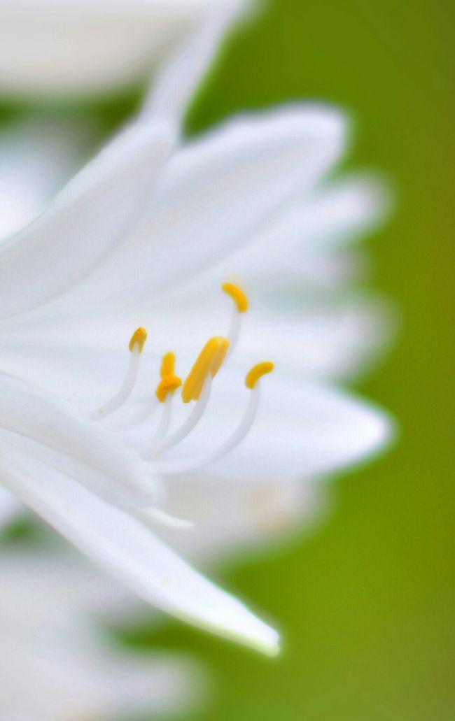 Flowers Focus Yellow White White Flower 50mm AF-S NIKKOR 50mm F /1.8G SE Nikon D7100