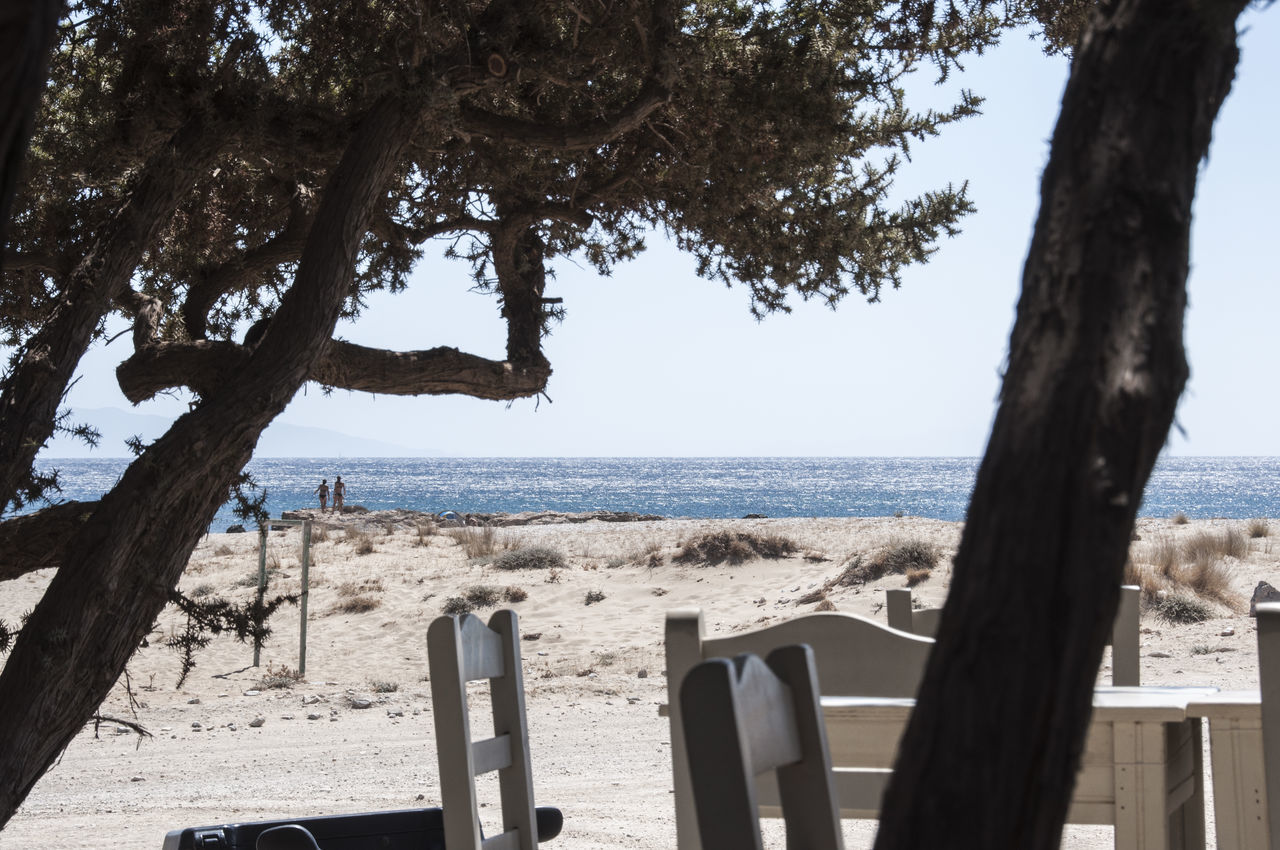 Beach Horizon Over Water If Trees Could Speak Life Is A Beach Scenics Seascape Seaside Summertime Tree Trunk Trees
