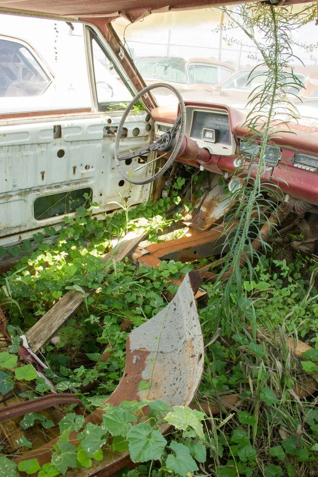 Car Auto Ruin Nothing Left Graveyard Beauty Rusty Graveyard Rotten Places Rustygoodness The End Rusty Car Showcase August Eyeemphoto CIRCLE Of LIFE Vintage Cars Cars Ruined Rusty Autos Vintage Broken Interior Steering Wheel Rotten Old Grassy