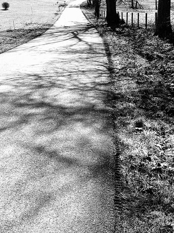 Light And Shadow Shadows Shades Of Grey Trees Road Backroad Barbed Wire Fencerow Landscapes With WhiteWall Here Belongs To Me
