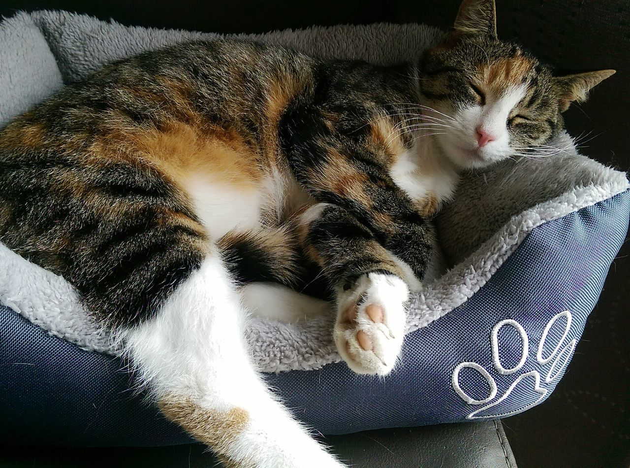 Cat Sleeping Cat Lazy Day Closed Eyes Relaxing Hello World That's Me Animal Photography Furryfriend Paw