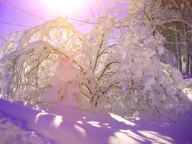 Snow Snowy Bushes Snowy Trees Snowy Tree Blizzard Art Blizzard Lavendar Lavendar Art Lavendar Snow I Love Purple 💜 Purple Passion Pastel Power Edit Junkie Editporn/filterporn Lavendar Filter