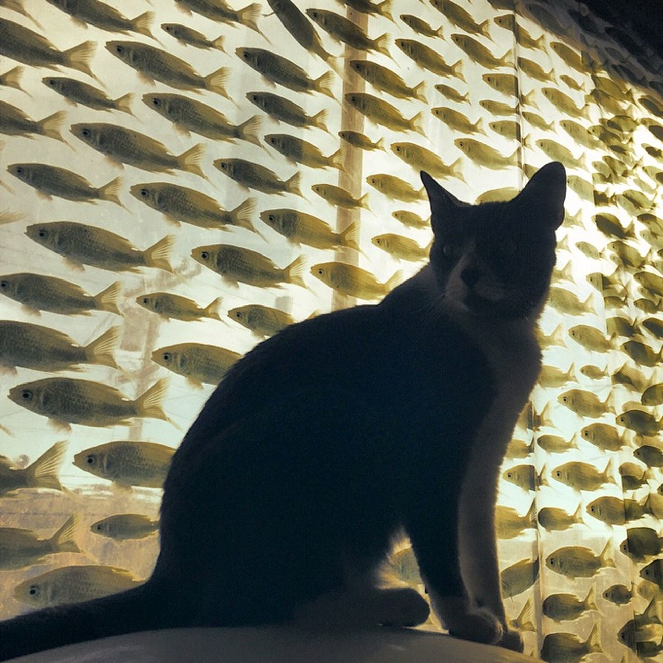 IPhoneography Silhouette Retrica Cat♡ My Cat
