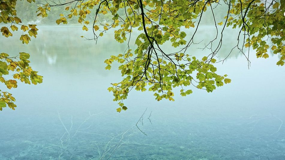 Scenery Lake Tree Beauty In Nature Architecture Water Lake Tree Tranquil Scene Scenics Tranquility Reflection Branch Idyllic Calm Leaf Beauty In Nature Green Color Nature Non-urban Scene Growth Majestic Vacations Tourism Standing Water Blue