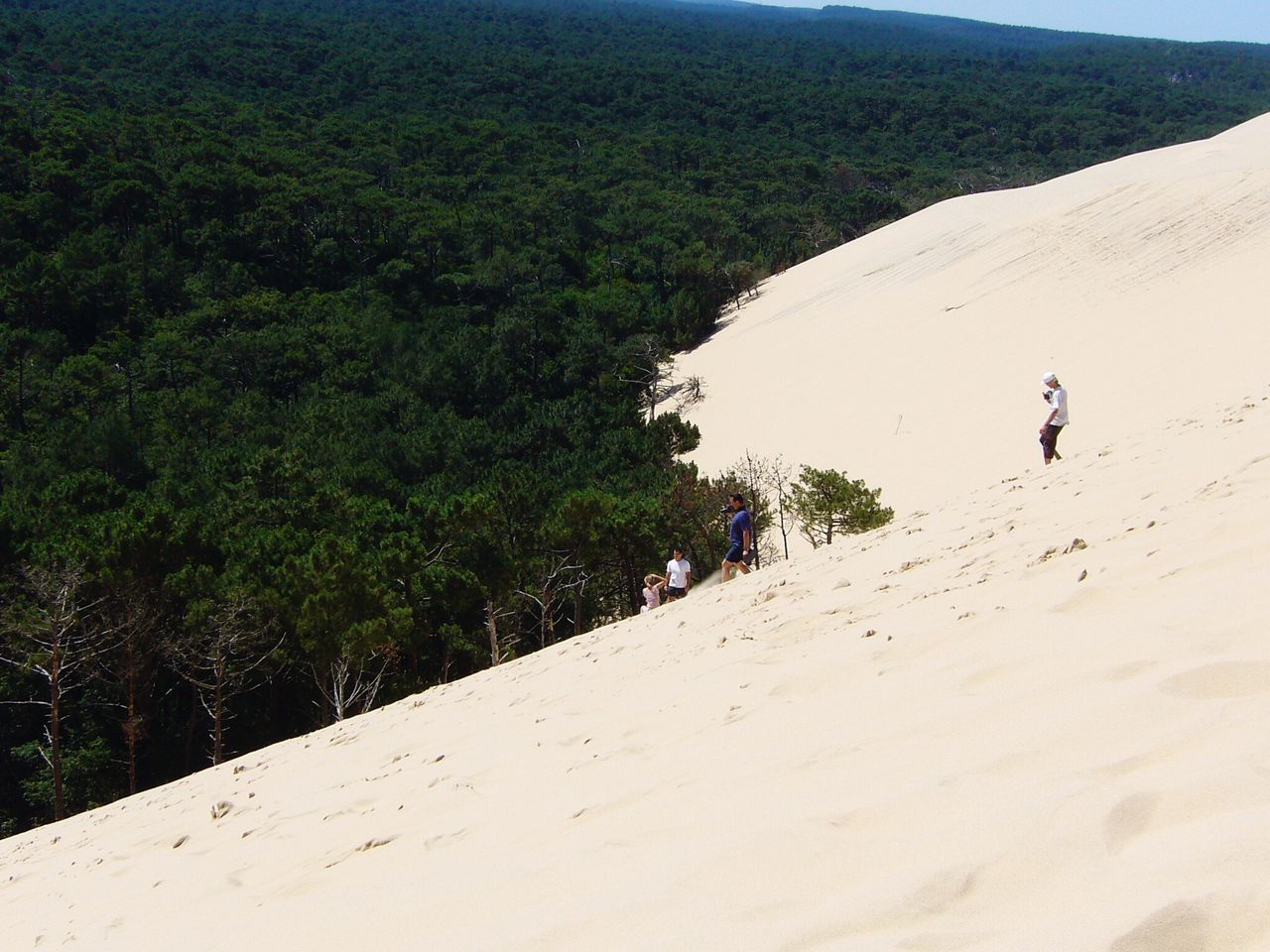Real People Lifestyles Nature Leisure Activity Day Outdoors Walking Men Beauty In Nature Scenics Landscape Vacations One Person Adventure Tree Travel Destinations Tranquil Scene Dune Du Pyla Summer Sand Dune Beauty In Nature Finding New Frontiers