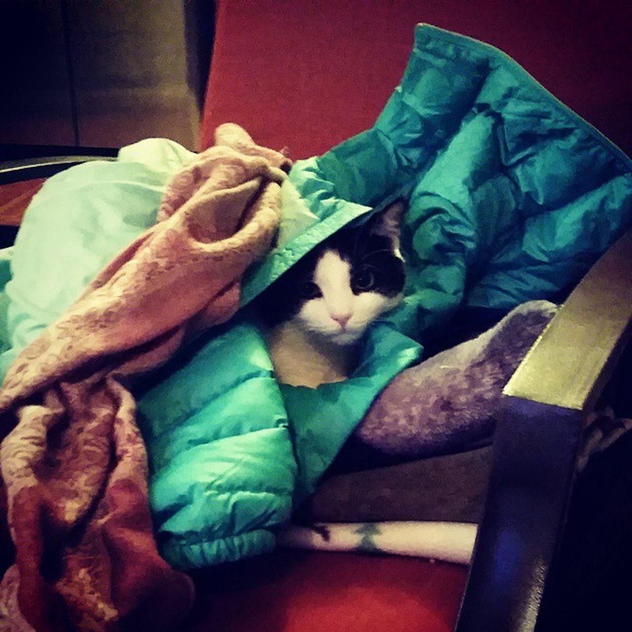 Richardthecat is snuggled up in my coat. Icantstandthecuteness Catsofinstagram Lovethiscat