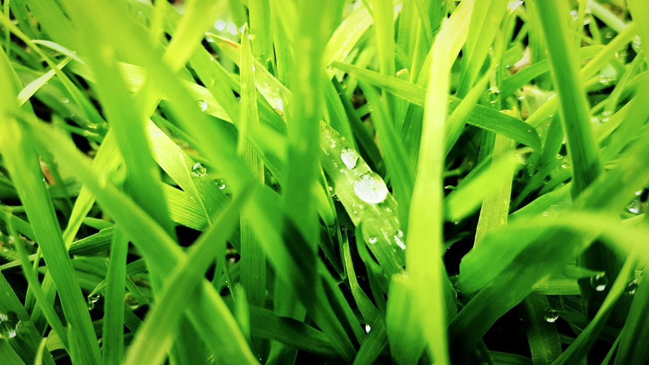 grass, green color, growth, nature, plant, full frame, drop, field, backgrounds, outdoors, day, no people, close-up, beauty in nature, freshness, leaf, fragility, water