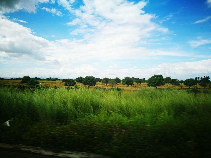 Sky Nature Grass
