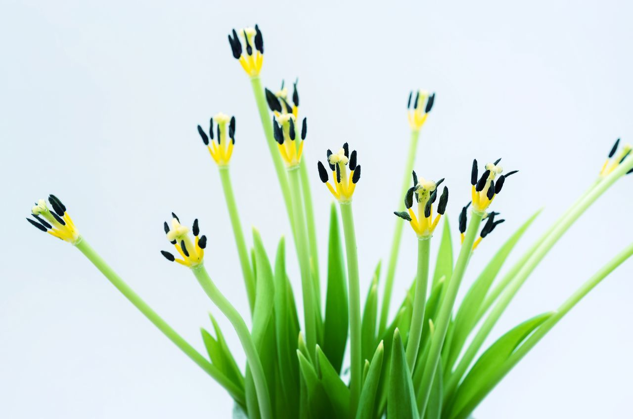 Flower Yellow Growth Nature Plant Freshness Flower Head Springtime Tulip Beauty In Nature No People Day Abstract Photography Abstract Nature Pattern Pieces Spring Green Green Color Tulips Flowers Spring Flowers