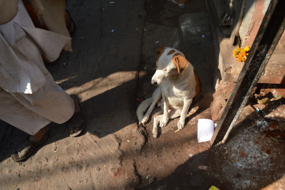 Street dog chilling in Chandni Chowk, New Delhi, 2014. Animal Themes Chandni Chowk Chandnichowk Crowd Dog Happy Dog India India Vibes Low Section New Delhi Street Dog Travel