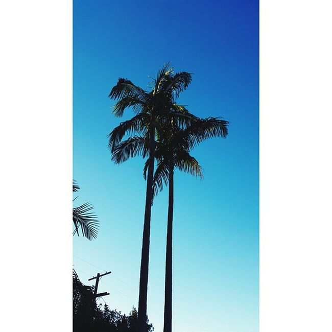 Palm Trees forever. L.A. you gorgeous city.