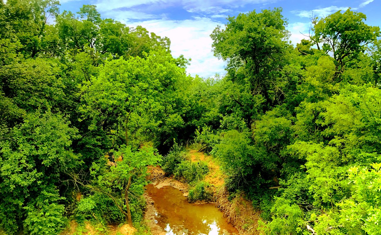 Texas Red Dirt River Nocona Lake Runoff Private Property Intriguing Beauty In Nature What will the story be, I'll share with you if you Follow Me :) Nature Growth Forest Outdoors Scenics No People Tranquility Water Sky Artbyart Photography