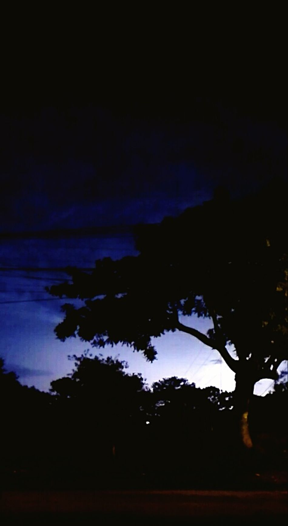 Lightning Bolt Forest Nature Naturesfury Guatemala Lovethis