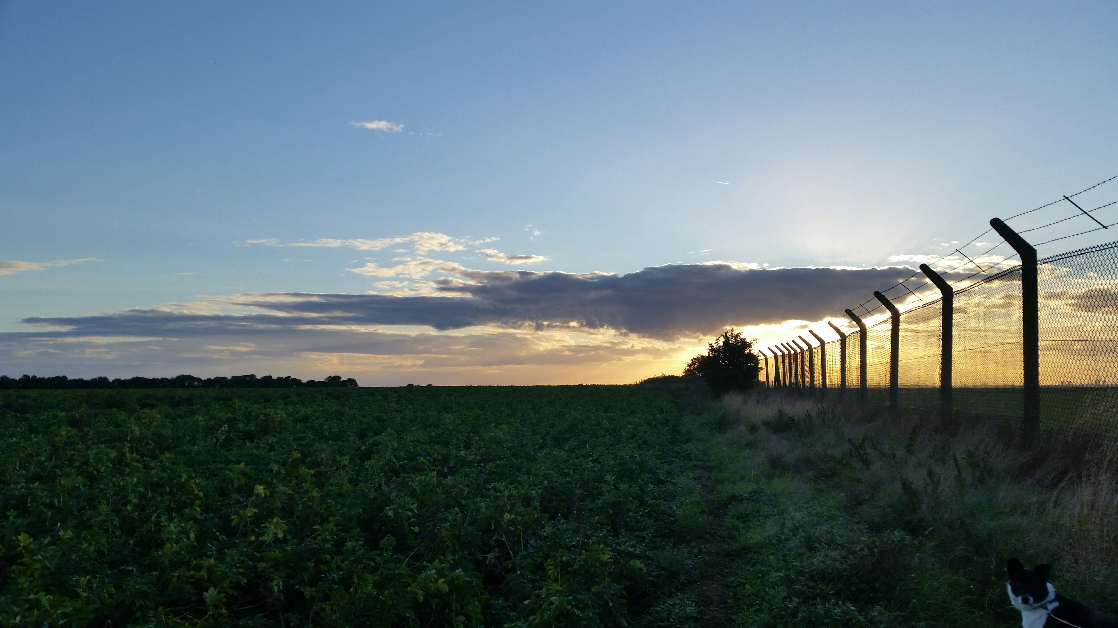 field, landscape, sky, rural scene, tranquil scene, agriculture, tranquility, fence, grass, beauty in nature, nature, scenics, farm, sunset, growth, copy space, grassy, plant, horizon over land, no people