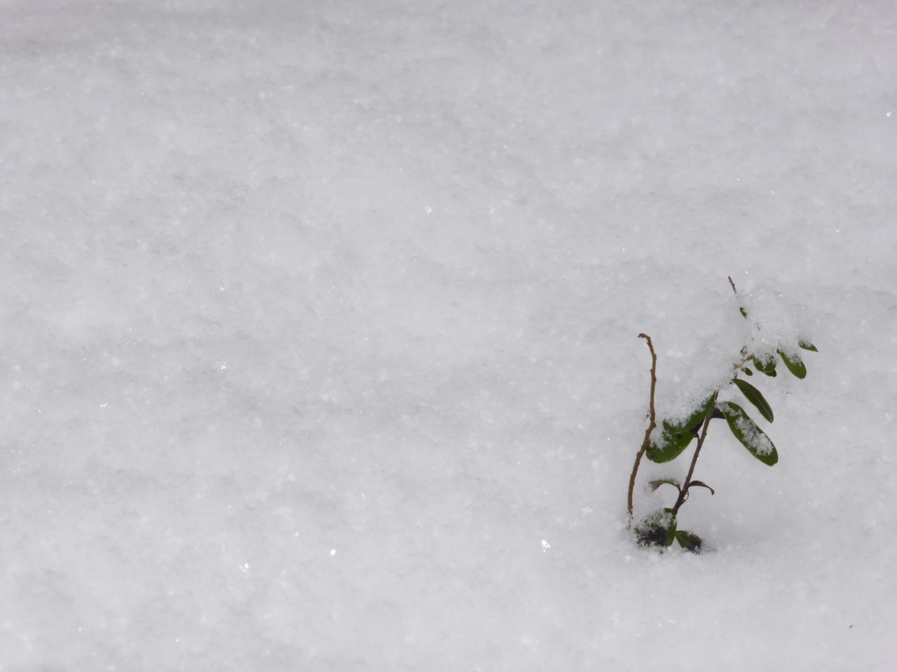 Lone Nature Winter Snow No People Cold Temperature Outdoors Day Lonely Objects Loneliness Plant