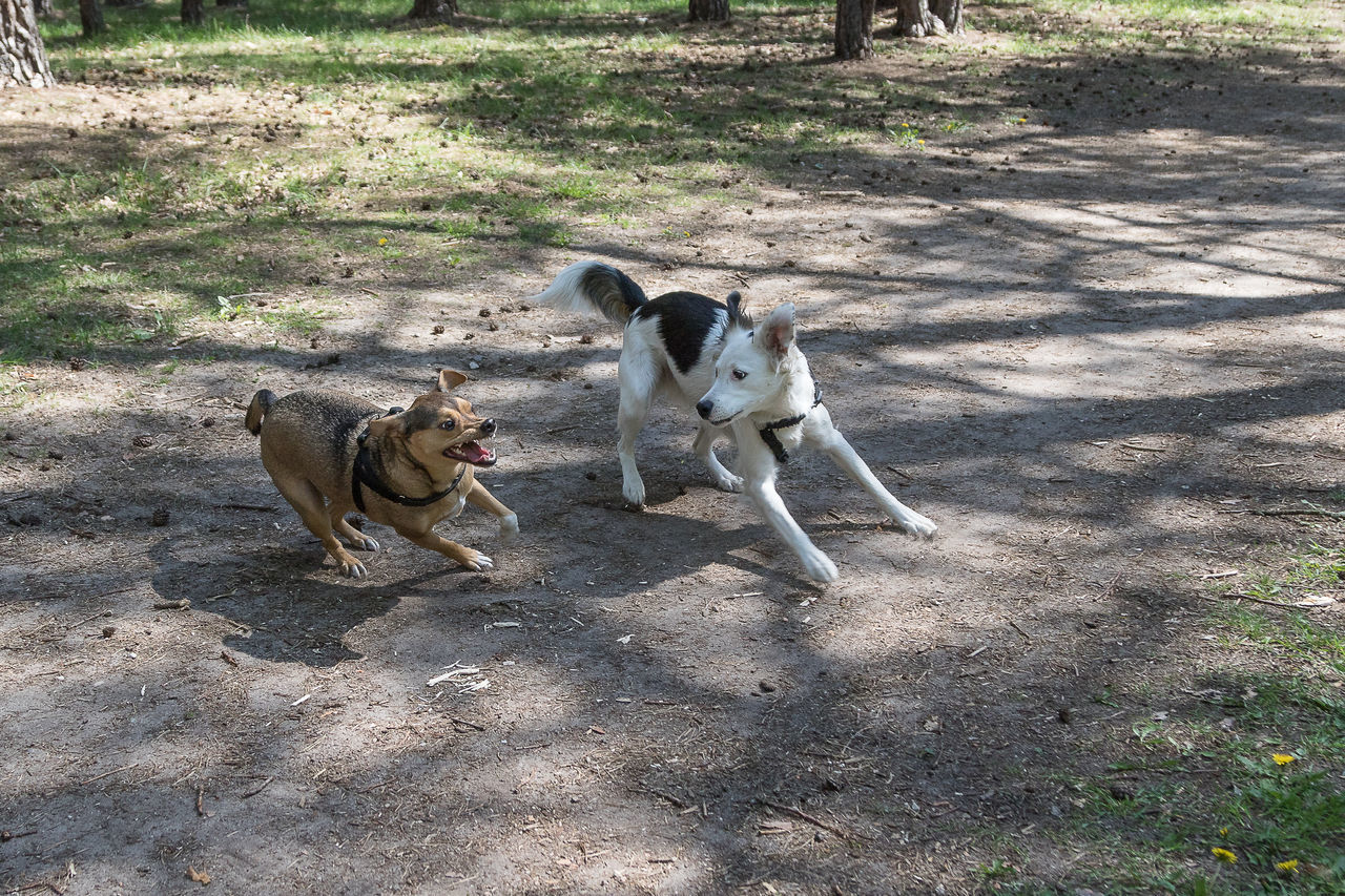 Aggression  Aggressive Animal Themes Animals In The Wild Day Dog Domestic Animals Field High Angle View Mammal Nature No People Outdoors Rudimental  Shadow Sunlight Young Animal