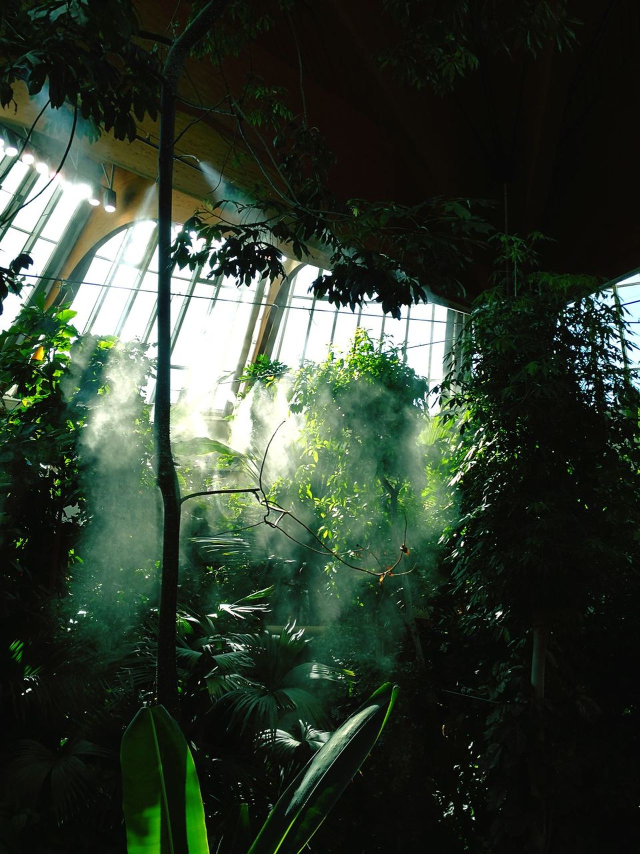 Green Tree Greenhouse No People Nature Green Eye Em Nature Lover EyeEm Best Shots - Nature Green Color Foggy Forest Colourful