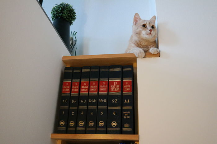 Cat and books Book Cat&book Clever Cat Home Home Interior Indoors  Shelf Sitting