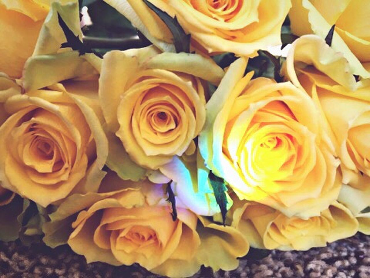 Yellow Flower Yellow Roses Beauty In Nature Rose - Flower Fragility Petal Nature Close-up Flower Head Freshness No People Indoors  Bouquet Day Yellow Rose Flower Collection Flower Photography Flower Bouquet  Yellow Flowers Yellow Flower Flowers Beauty In Nature The City Light