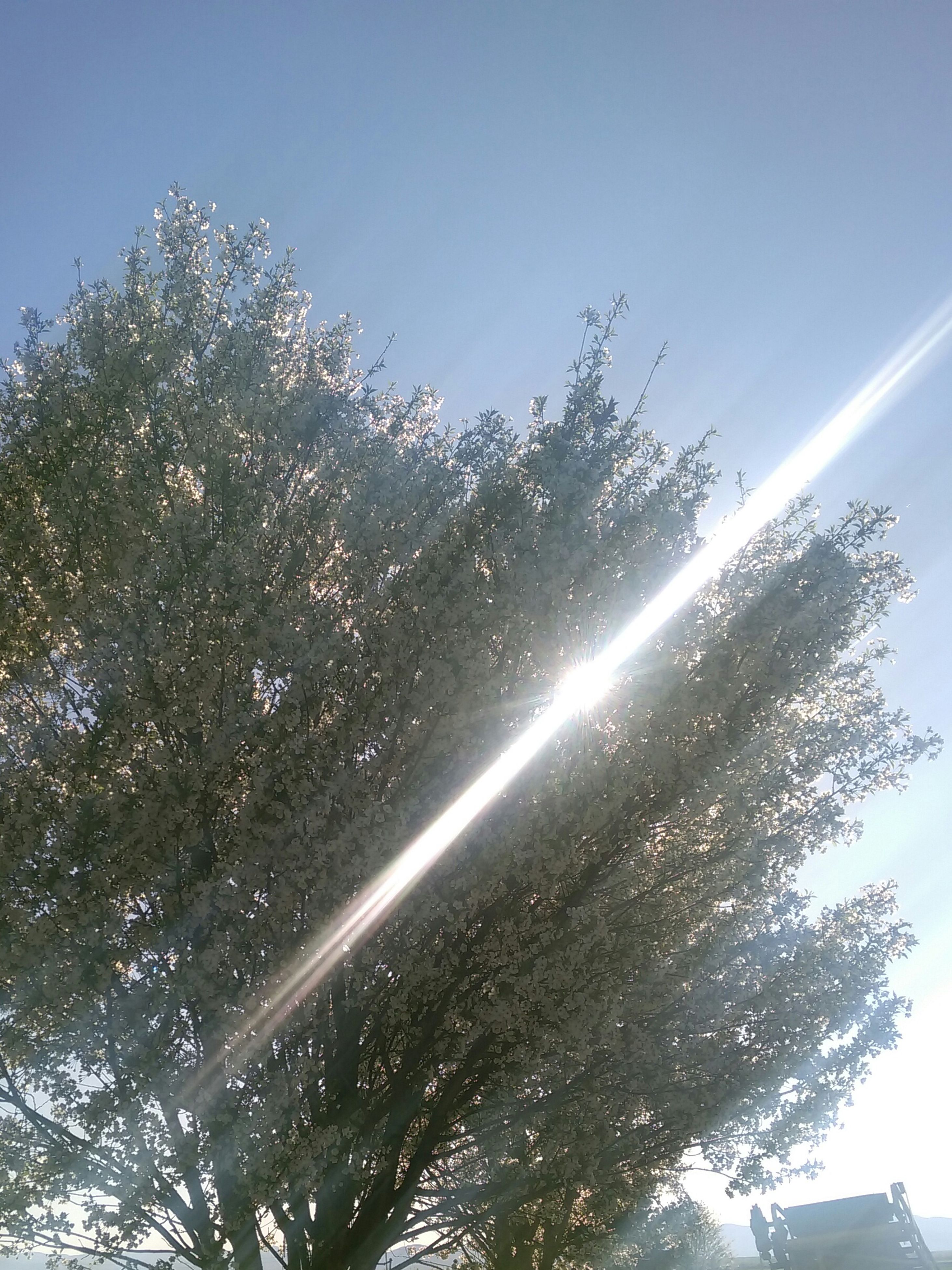 low angle view, tree, clear sky, sun, blue, sunlight, sunbeam, nature, growth, beauty in nature, sky, branch, lens flare, tranquility, sunny, day, outdoors, no people, vapor trail, scenics