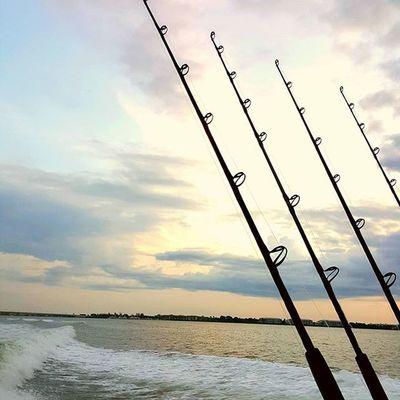 Fish Southflorida Waytooearly Catchingmeashark