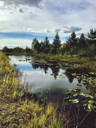 EyeEmNewHere EyeEm Nature Lover Landscape_Collection Landscape Lake Pond Water Reflection Sky Tree Nature Tranquil Scene Cloud - Sky Scenics Tranquility Beauty In Nature Outdoors No People Day Grass Growth Forest Lost In The Landscape Perspectives On Nature