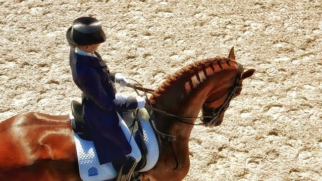 Animal Themes Brown Day Dressage Competition Leisure Activity Lifestyles Men Olympic Dressage Trial One Animal Outdoors Person Real People Sand Shoe Standing Sunlight Tall Boots Togetherness Working Animal