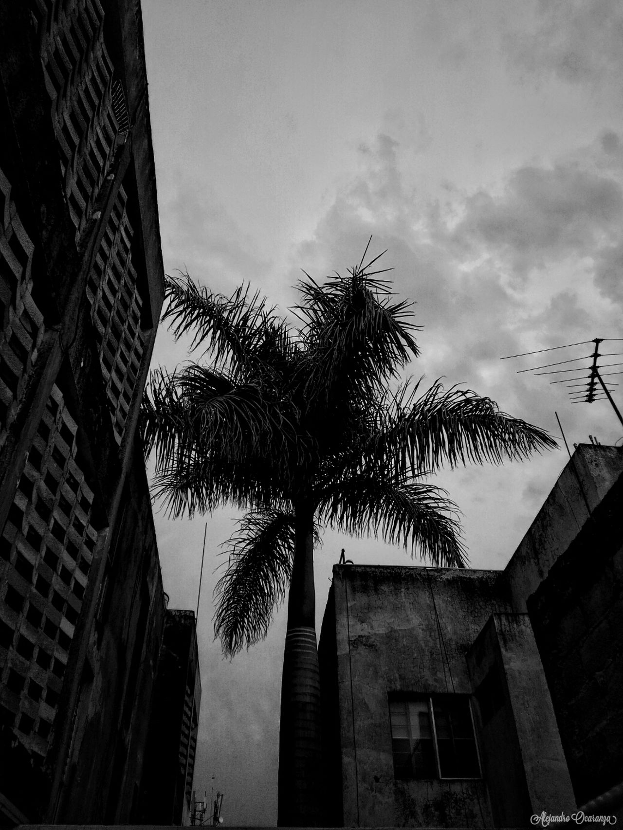 Al Final del Dia Nightphotography Shadow Black & White Blackandwhitephotography Blsckandwhite Blake_and_white City Black And White Photography Nature Day Close-up No People Beauty In Nature Illuminated Photographie  First Eyeem Photo Photo Guadalajara Mexico Photography Photographer Guadalajara Jalisco Photos Plant Sky