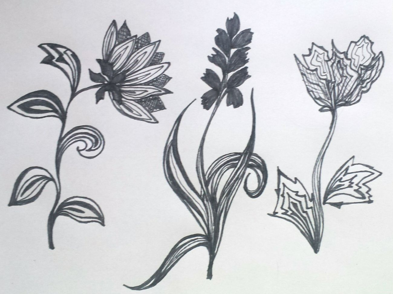 Sketch Black Color Paper Plant Drawing - Art Product Drawing Flowers Sketch Pad No People Ink