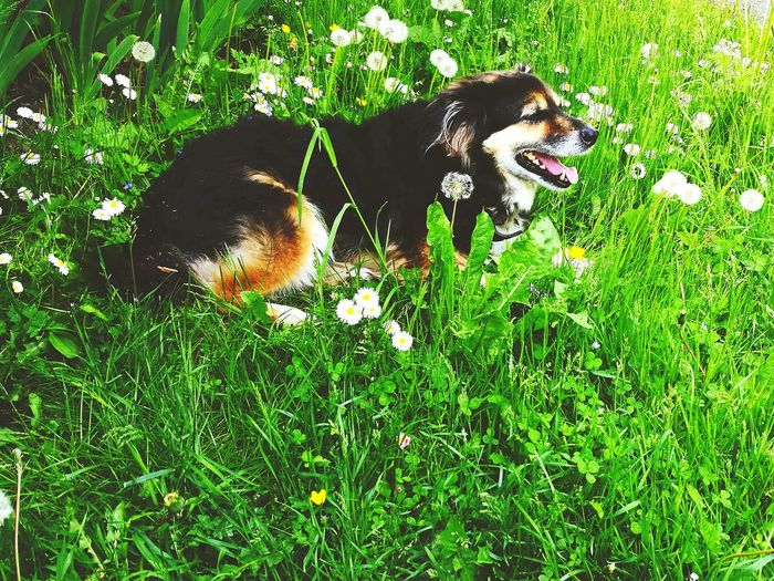 Pets Dog Countryside Green Grass Flowers
