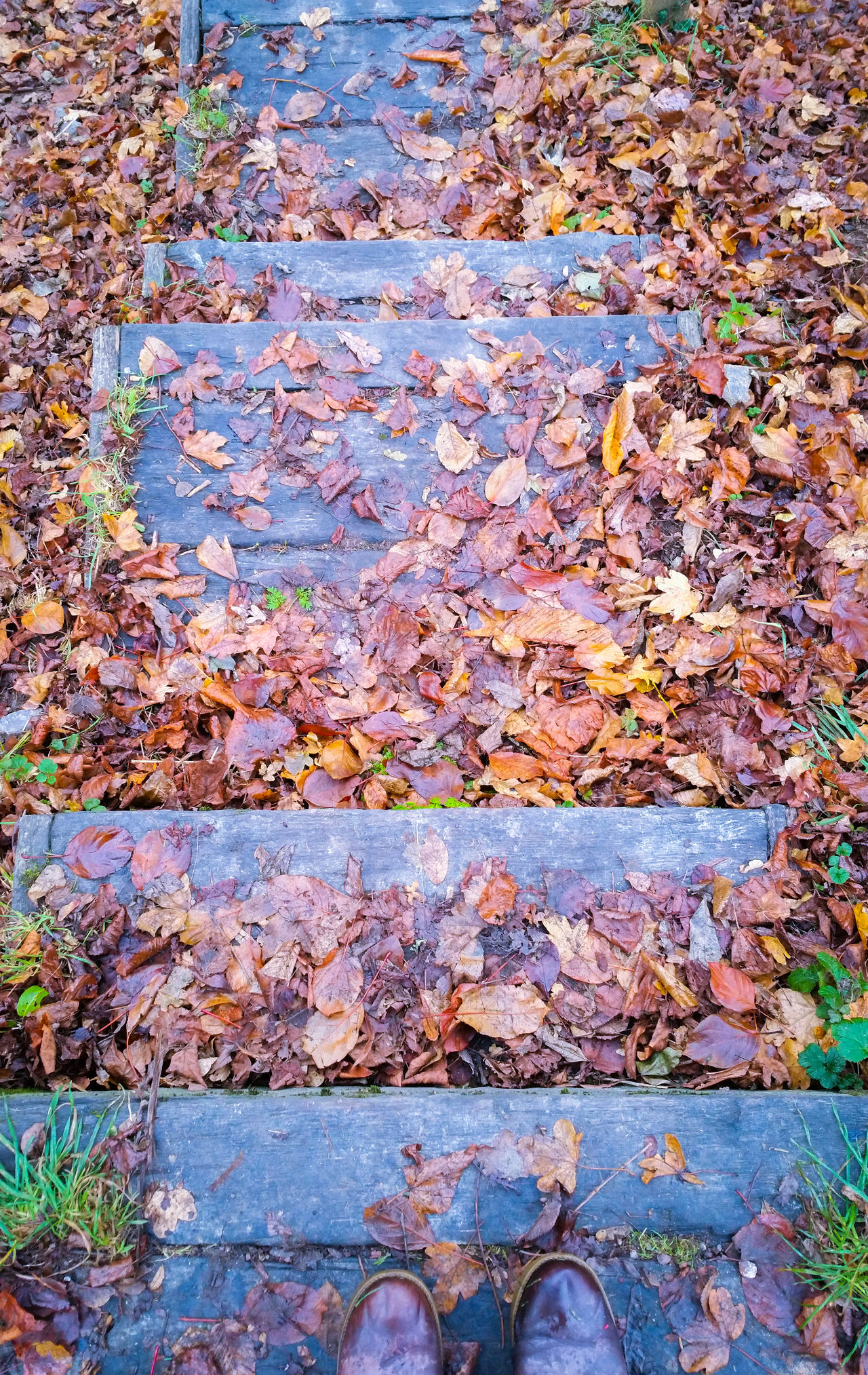 Leaves covered Steps Outdoors Day High Angle View Multi Colored Nature Textured  Backgrounds Beauty In Nature Close-up Autumn Fall Shoes Boots Looking Down Stairs Wood - Material Park Wales Season  Temperate Newtown Powys Countryside Britain