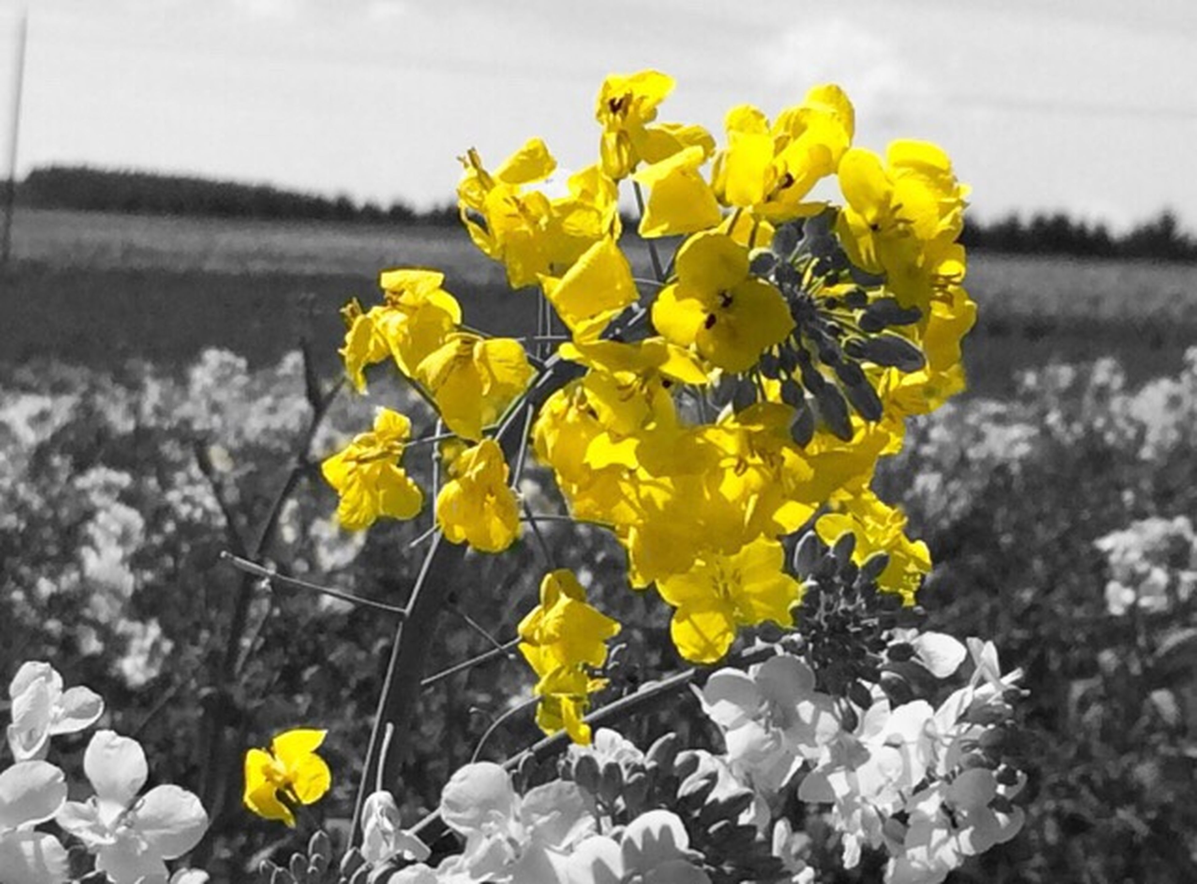 flower, yellow, fragility, freshness, petal, growth, beauty in nature, plant, flower head, nature, blooming, focus on foreground, field, close-up, in bloom, stem, blossom, day, springtime, sky