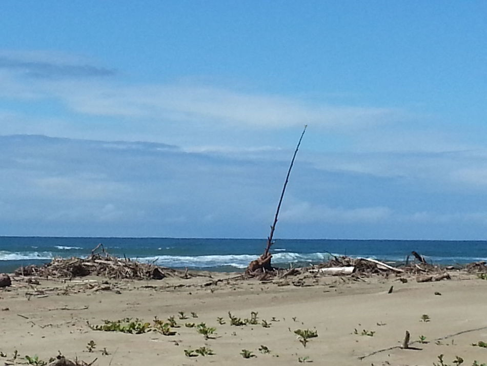 Taking Photos Walking On The Beach Check This Out Tree Branch  Beauty Of Nature Blue Sky Sea_collection Colour Of Life Sea Water Sand Beach Life South Africa Beautiful ♥ Sea Water Sea And Sky Beach Photography