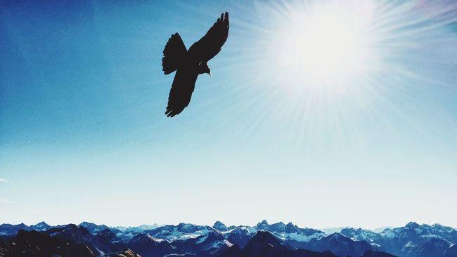 Skyandmountains Mountains Tadaa Community EyeEm Nature Lover Nebelhorn Oberstdorf Raven