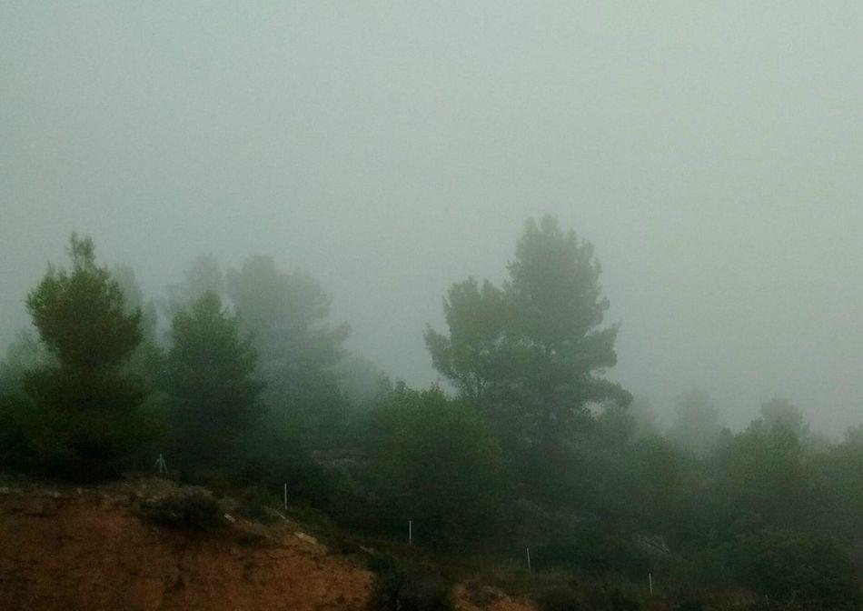 Niebla. Boira Fog Fog_collection Nieblas Niebla Matinal Niebla